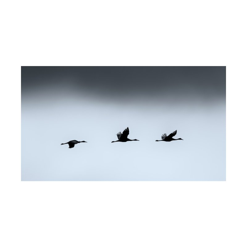 Cranes In Flight Cards & Gifts Bag by Glassmeyer Photography Print and Gift Shop