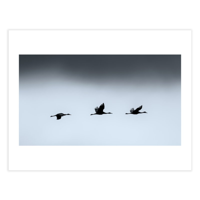 Cranes In Flight Prints Fine Art Print by Glassmeyer Photography Print and Gift Shop