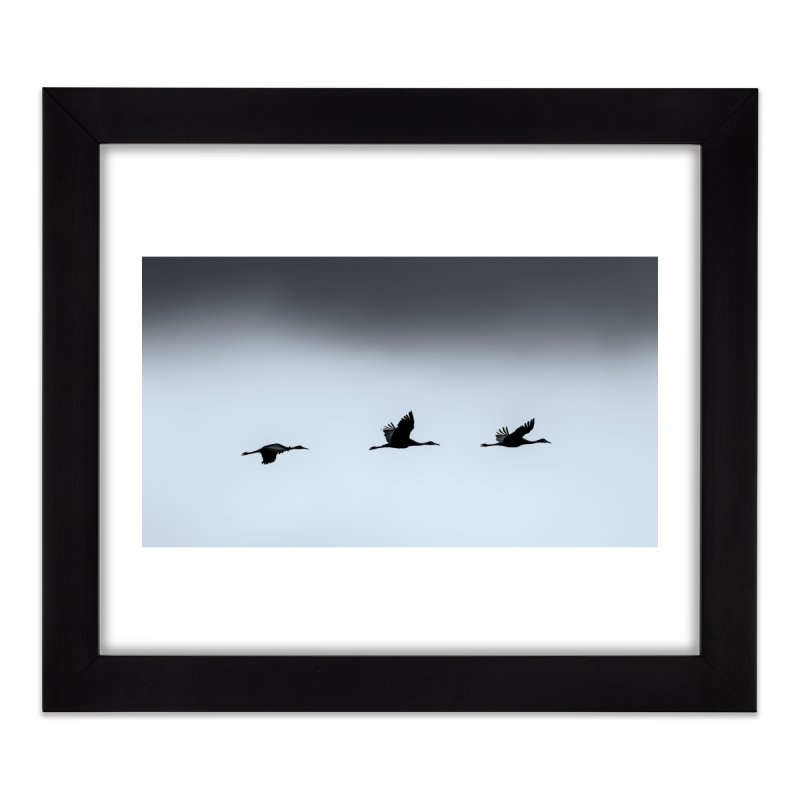 Cranes In Flight Prints Framed Fine Art Print by Glassmeyer Photography Print and Gift Shop