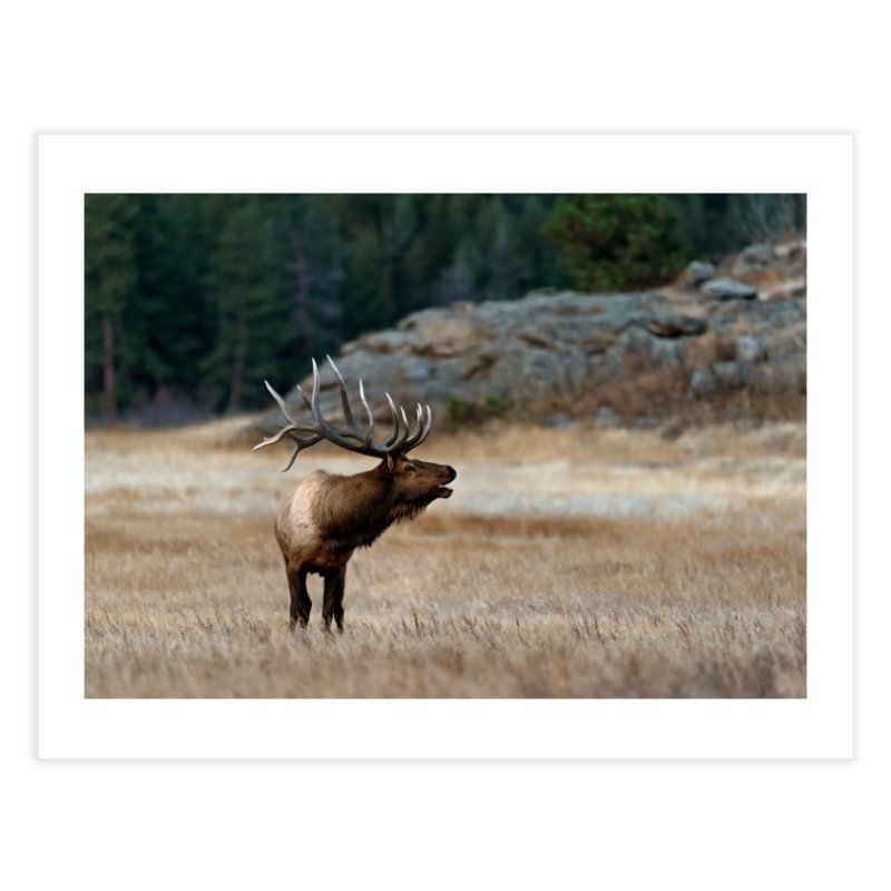 Bugle Prints Fine Art Print by Glassmeyer Photography Print and Gift Shop