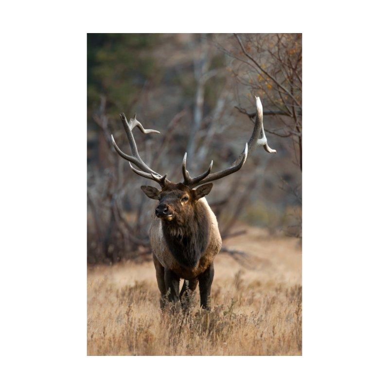 Bull Elk Portrait Prints Fine Art Print by Glassmeyer Photography Print and Gift Shop