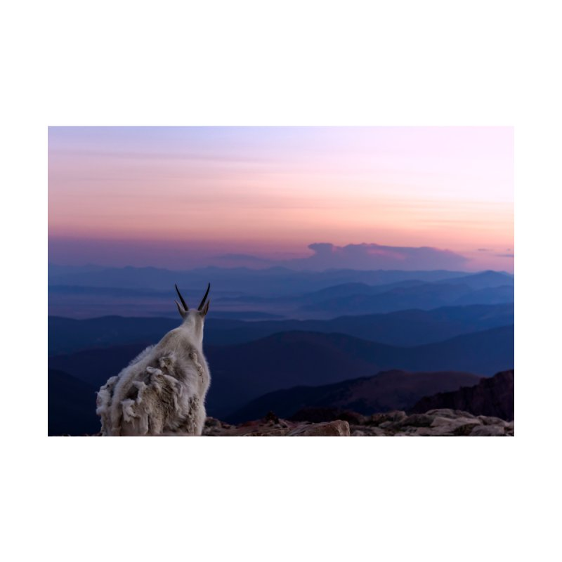 Mountain Goat Sunset Cards & Gifts Mug by Glassmeyer Photography Print and Gift Shop