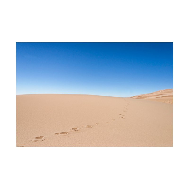 Footprints in the Sand Cards & Gifts Magnet by Glassmeyer Photography Print and Gift Shop