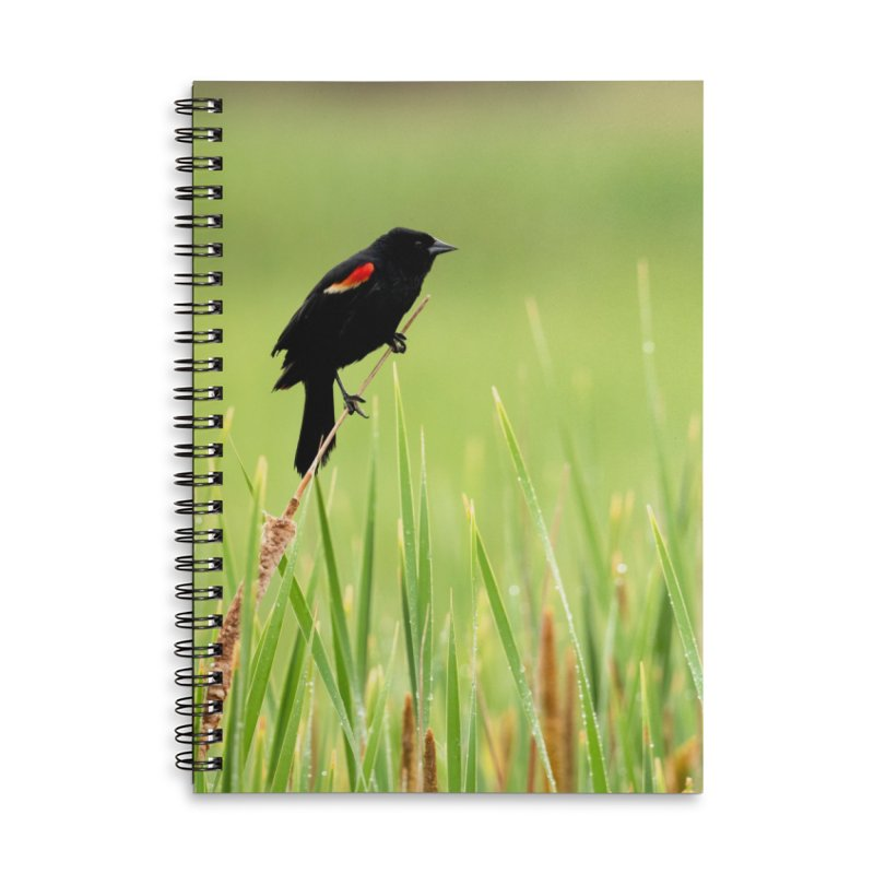 Red Wing Black Bird Cards & Gifts Notebook by Glassmeyer Photography Print and Gift Shop