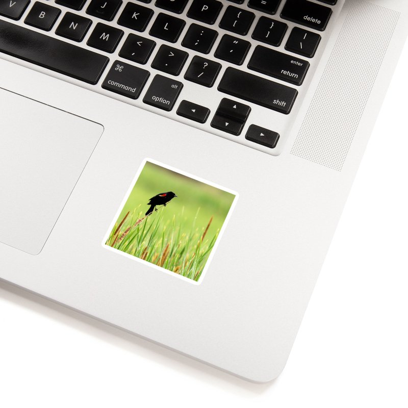 Red Wing Black Bird Cards & Gifts Sticker by Glassmeyer Photography Print and Gift Shop