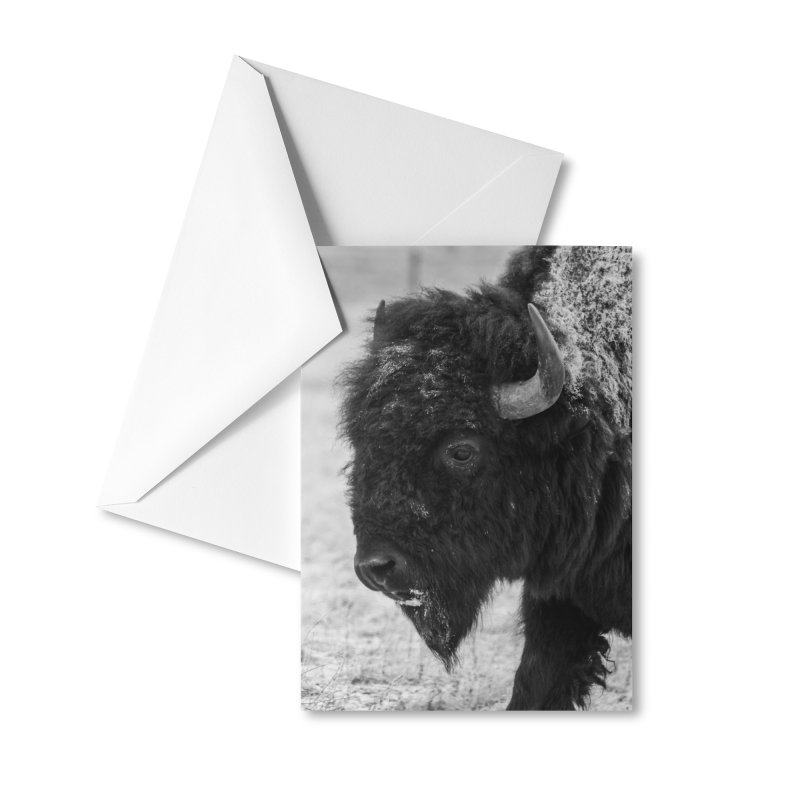 Winter Bison Cards & Gifts Greeting Card by Glassmeyer Photography Print and Gift Shop