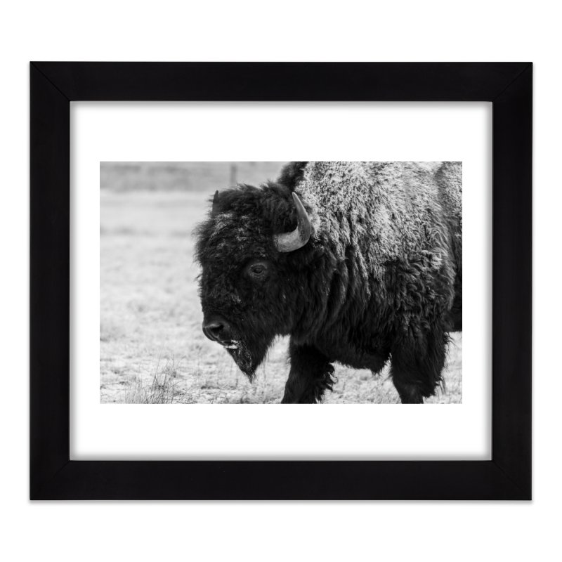 Winter Bison Prints Framed Fine Art Print by Glassmeyer Photography Print and Gift Shop