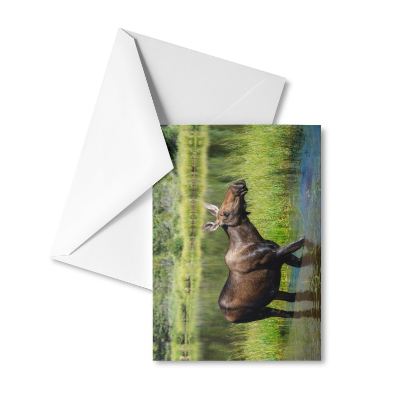 Grazing Moose Cards & Gifts Greeting Card by Glassmeyer Photography Print and Gift Shop