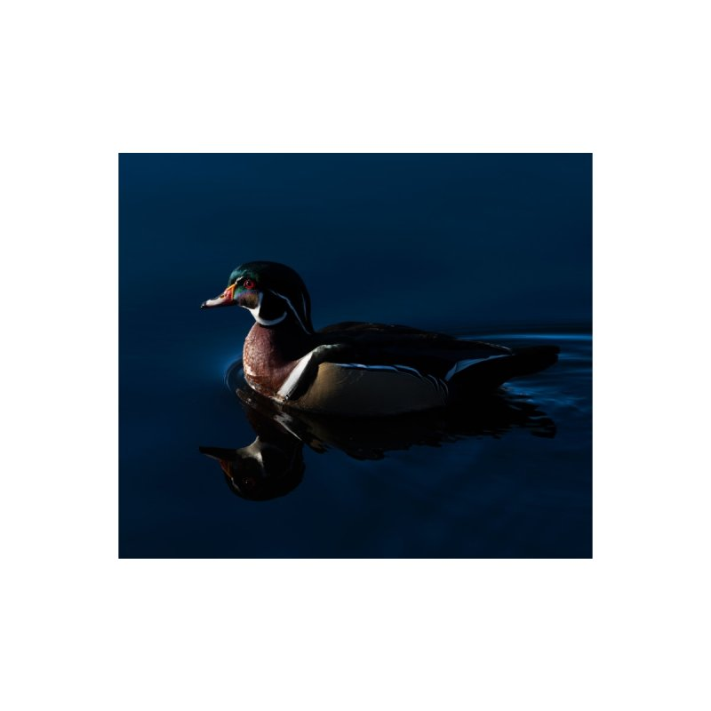 Wood Duck Prints Fine Art Print by Glassmeyer Photography Print and Gift Shop