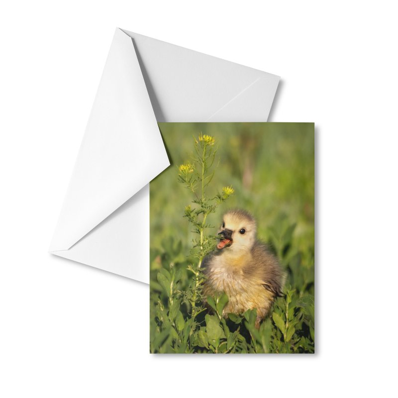 Baby Goose Cards & Gifts Greeting Card by Glassmeyer Photography Print and Gift Shop