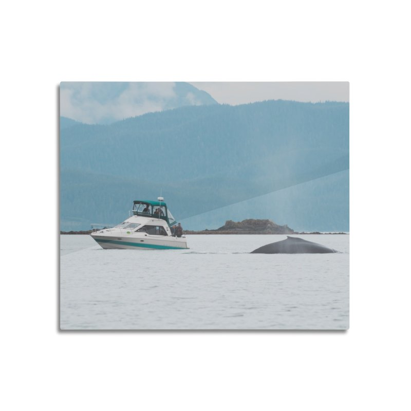 Whale Watching Home Mounted Aluminum Print by AirStory's Shop