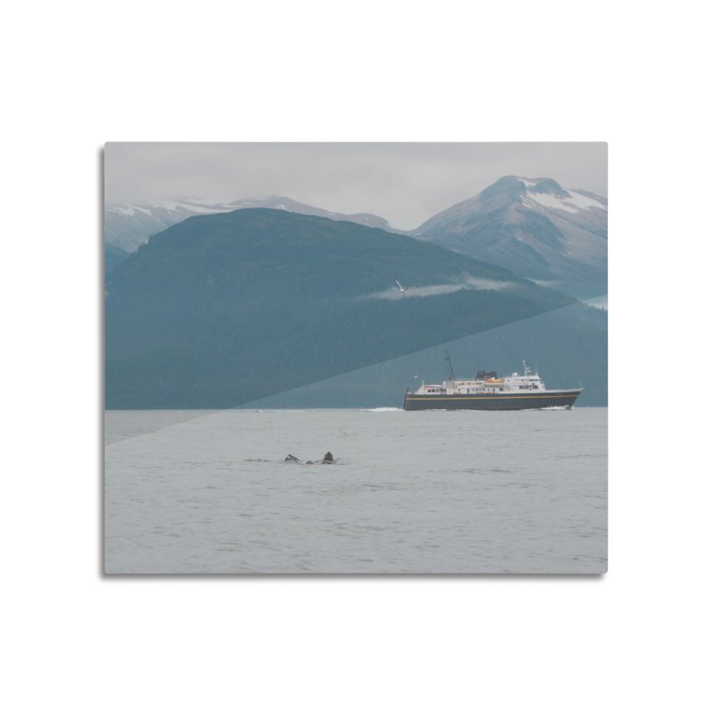 Sea Lion Swim Home Mounted Aluminum Print by AirStory's Shop