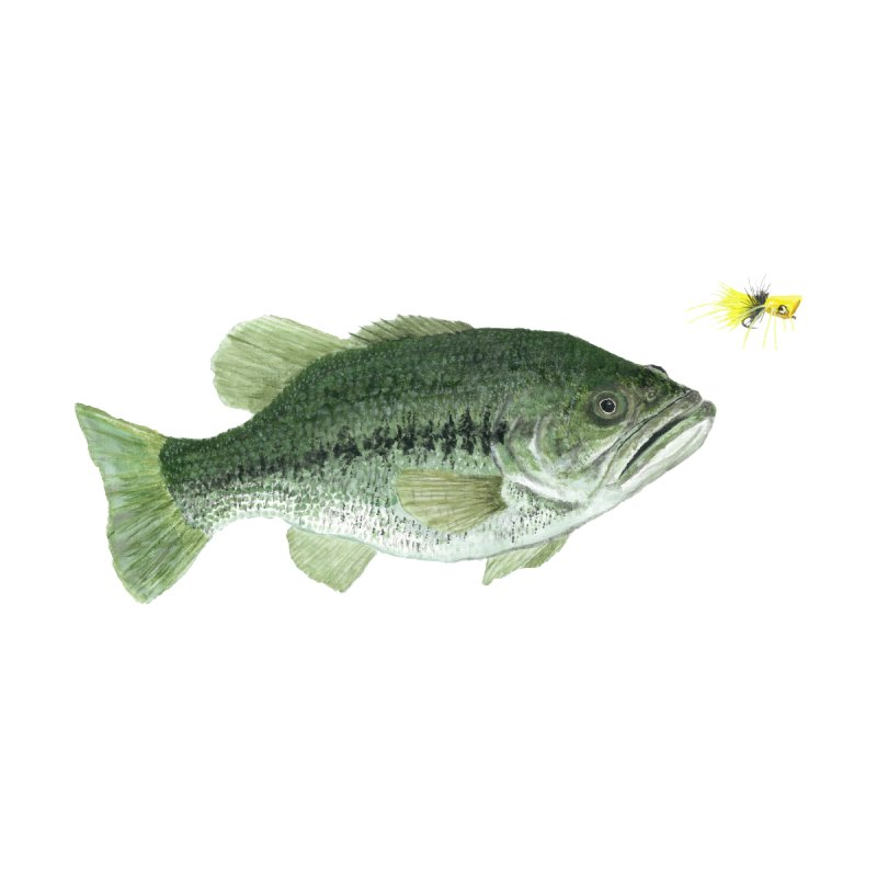 Largemouth Bass with Popping Bug Home Bath Mat by Art By BB's Artist Shop