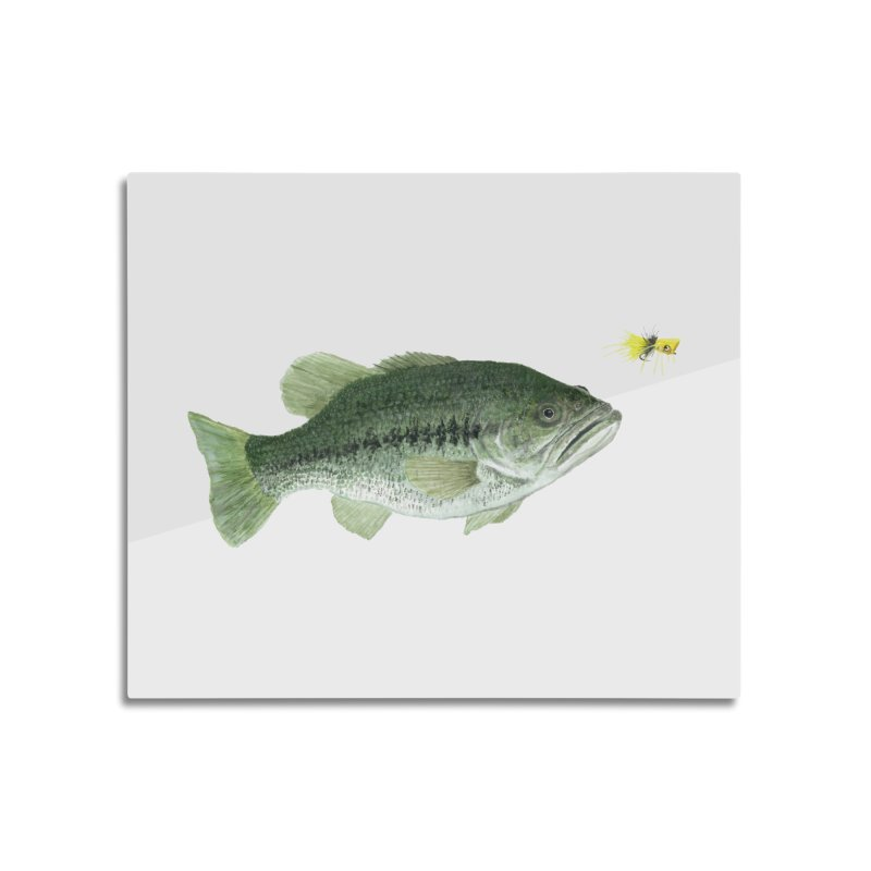Largemouth Bass with Popping Bug Home Mounted Aluminum Print by Art By BB's Artist Shop