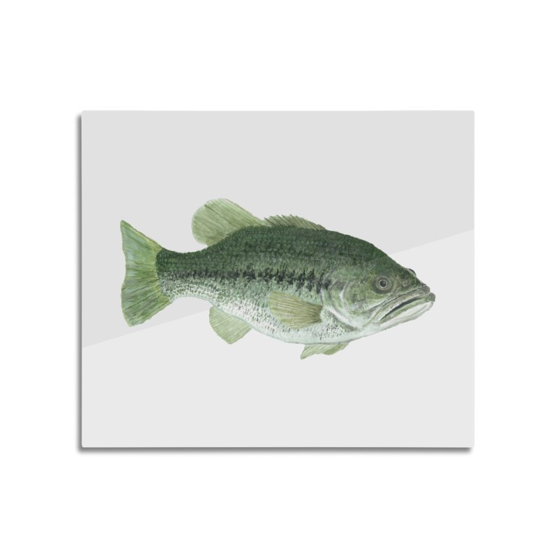 Largemouth Bass PNG Home Mounted Aluminum Print by Art By BB's Artist Shop