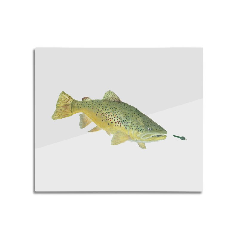 Brown Trout with fly Home Mounted Aluminum Print by Art By BB's Artist Shop