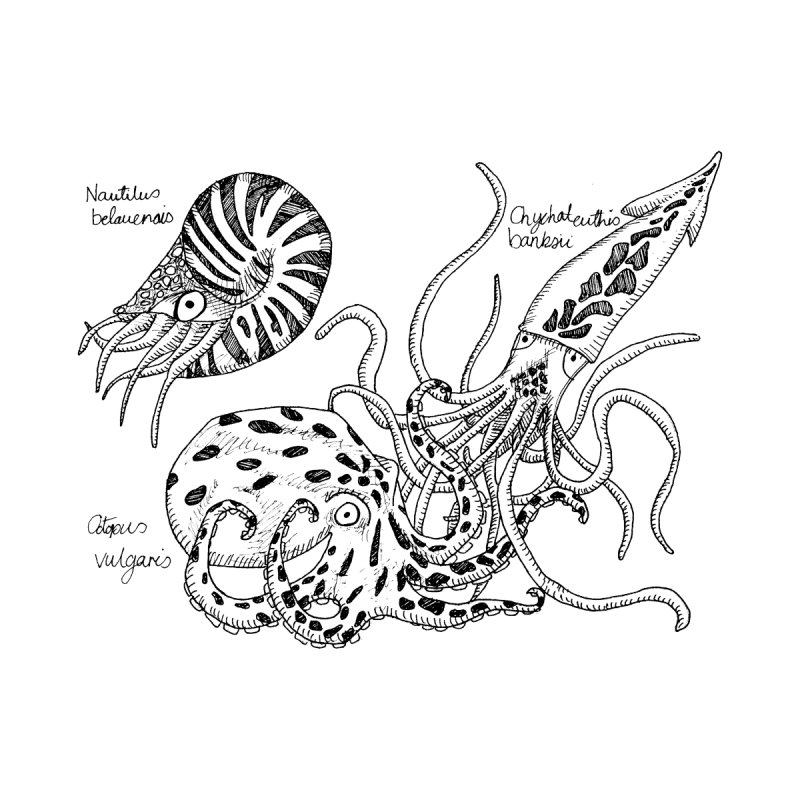 Cephalopods None  by artbydebbielindsay's Artist Shop