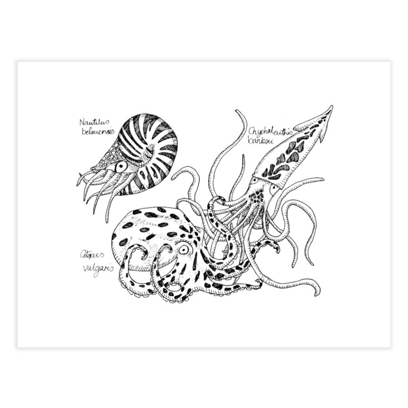 Cephalopods Home Fine Art Print by artbydebbielindsay's Artist Shop