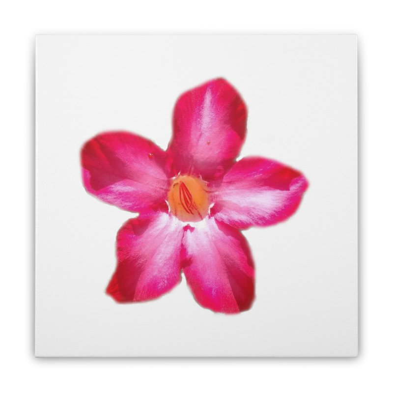 Desert Rose Home Stretched Canvas by ❁Art Peace Designs❁