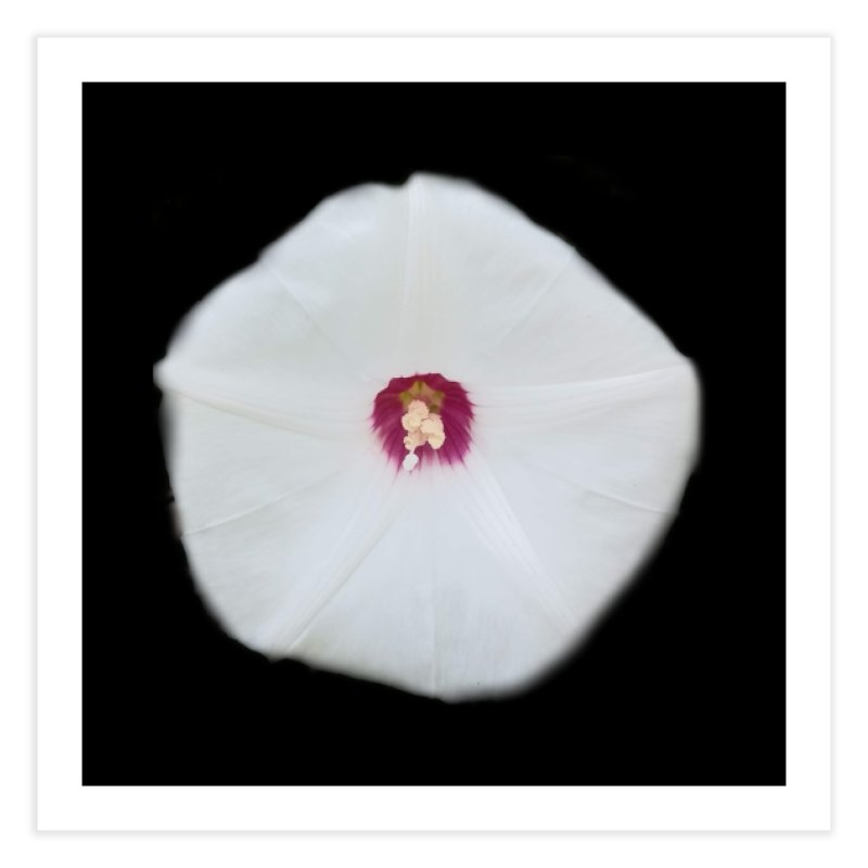 Morning Glory Bloom Home Fine Art Print by ❁Art Peace Designs❁