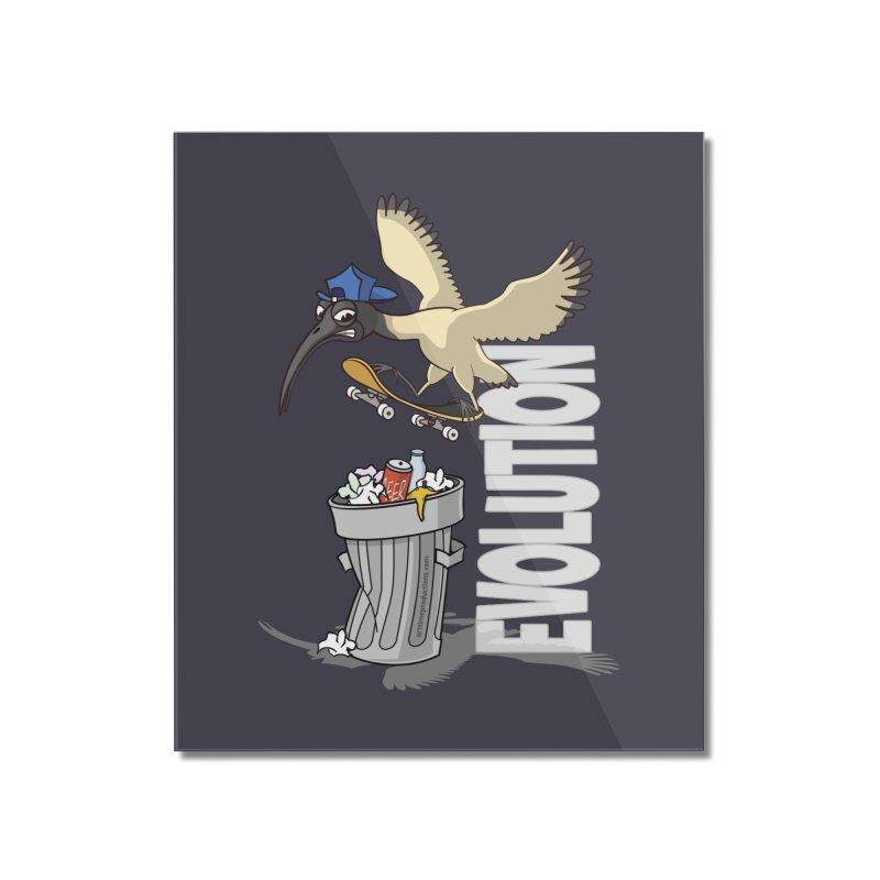 Bin Chicken Ibis Evolution Skateboarder Australian Bird Home Mounted Acrylic Print by Art Time Productions by TET