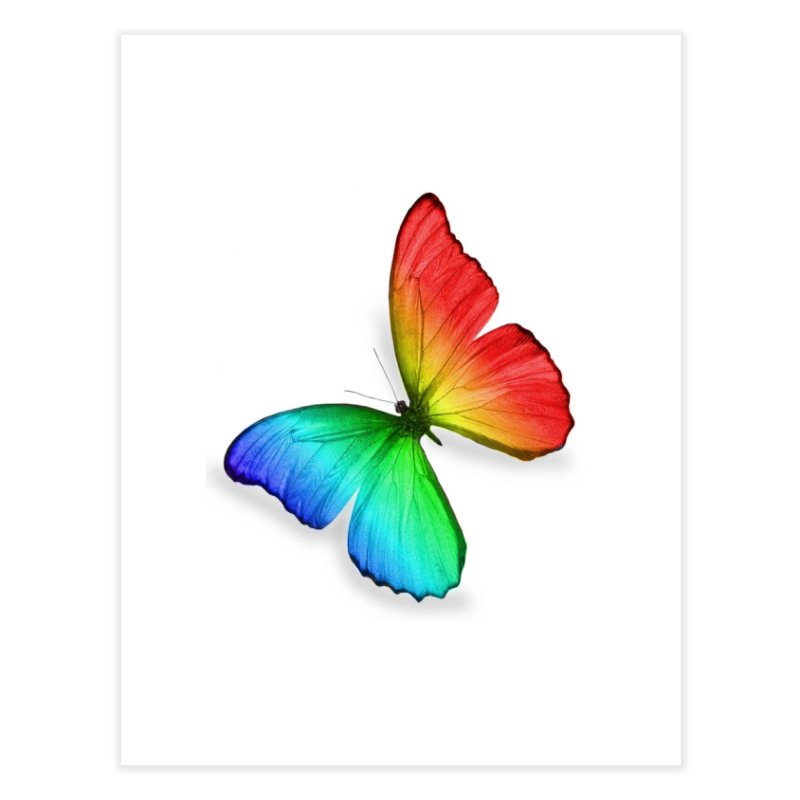 Rainbow Butterfly Home Fine Art Print by Feed me tacos!