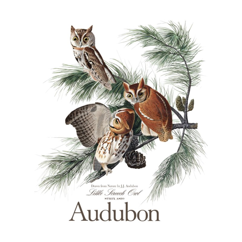 John James Audubon Screech Owls by Official National Audubon Society Retail Store