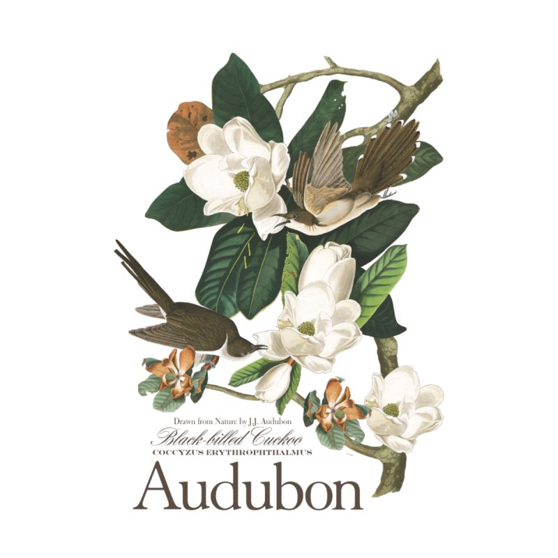 John James Audubon Cuckoo by Official National Audubon Society Retail Store