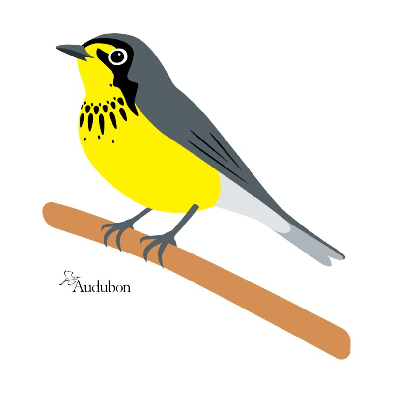 Canada Warbler by Shayna Marchese Women's T-Shirt by Official National Audubon Society Retail Store