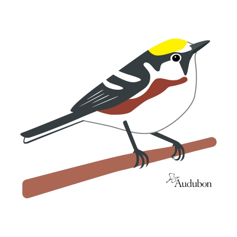 Chestnut-sided Warbler by Shayna Marchese Men's Longsleeve T-Shirt by Official National Audubon Society Retail Store