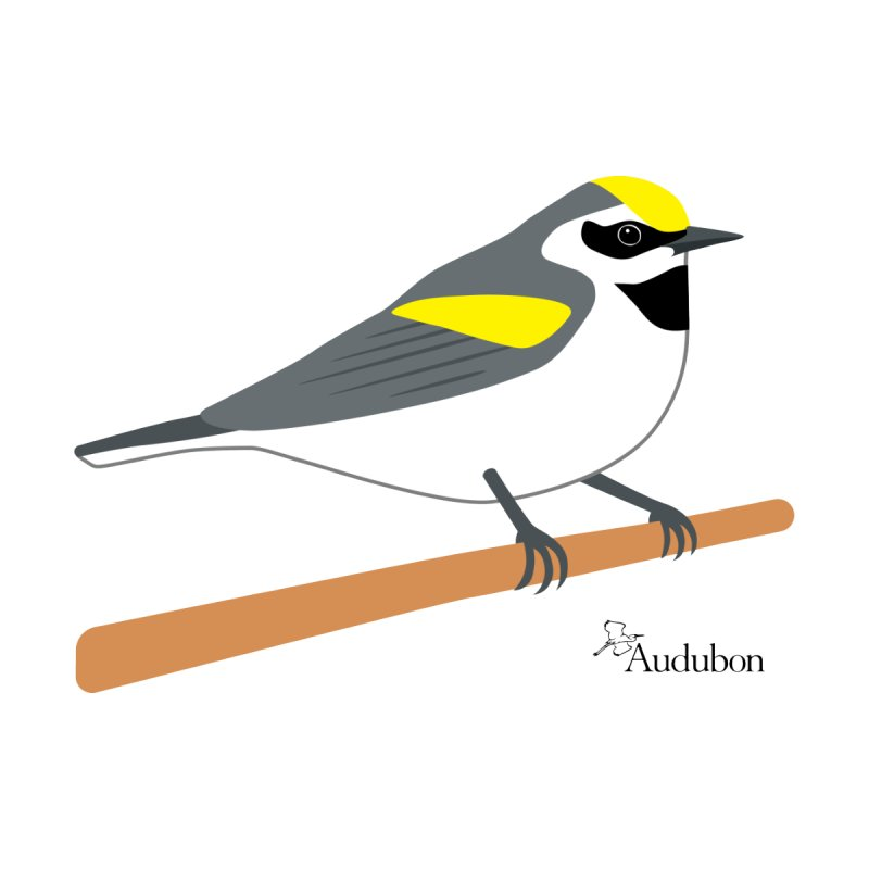 Golden-winged Warbler by Shayna Marchese Women's T-Shirt by Official National Audubon Society Retail Store