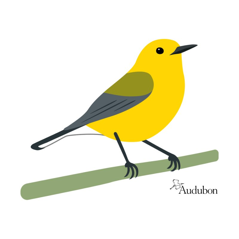 Prothonotary Warbler by Shayna Marchese Women's T-Shirt by Official National Audubon Society Retail Store