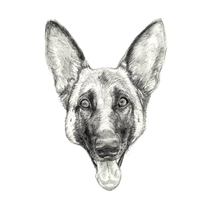 Cleo, the German Shepherd Home Fine Art Print by Ayota Illustration Shop