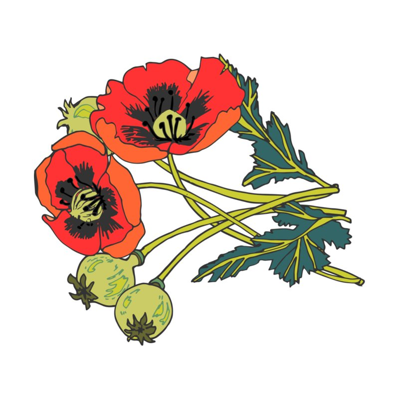 Red Poppies Women's T-Shirt by bad arithmetic