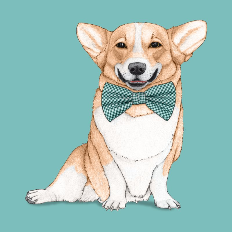 Corgi Dog by Barruf