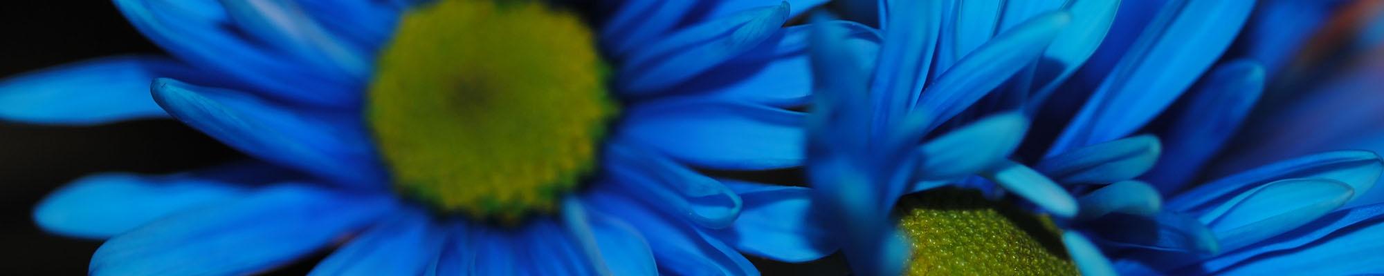 bluedaisy66 Cover
