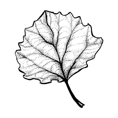 Design for Monochrome Leaf Stipple Shaded Ink Drawing