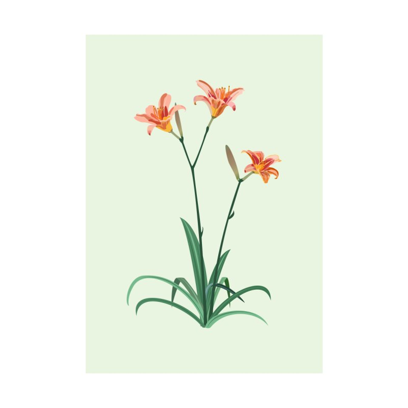 Daylilies - Wildflower Collection by buxmontweb's Artist Shop