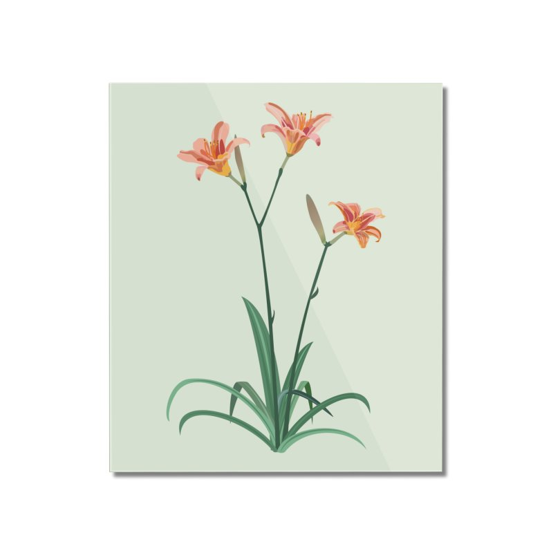 Daylilies - Wildflower Collection Home Mounted Acrylic Print by buxmontweb's Artist Shop