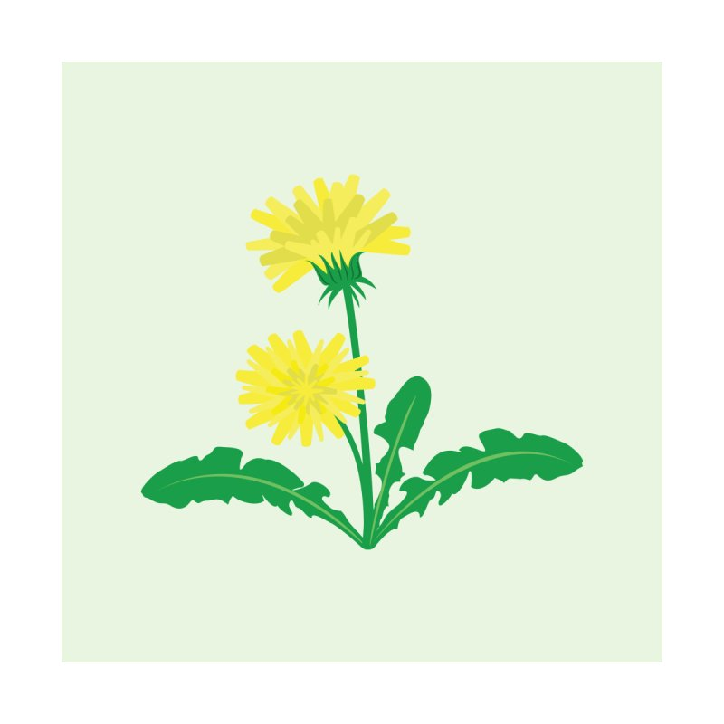 Dandelion - Wildflower Collection Home Stretched Canvas by buxmontweb's Artist Shop
