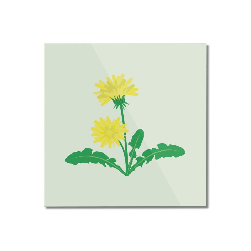 Dandelion - Wildflower Collection Home Mounted Acrylic Print by buxmontweb's Artist Shop