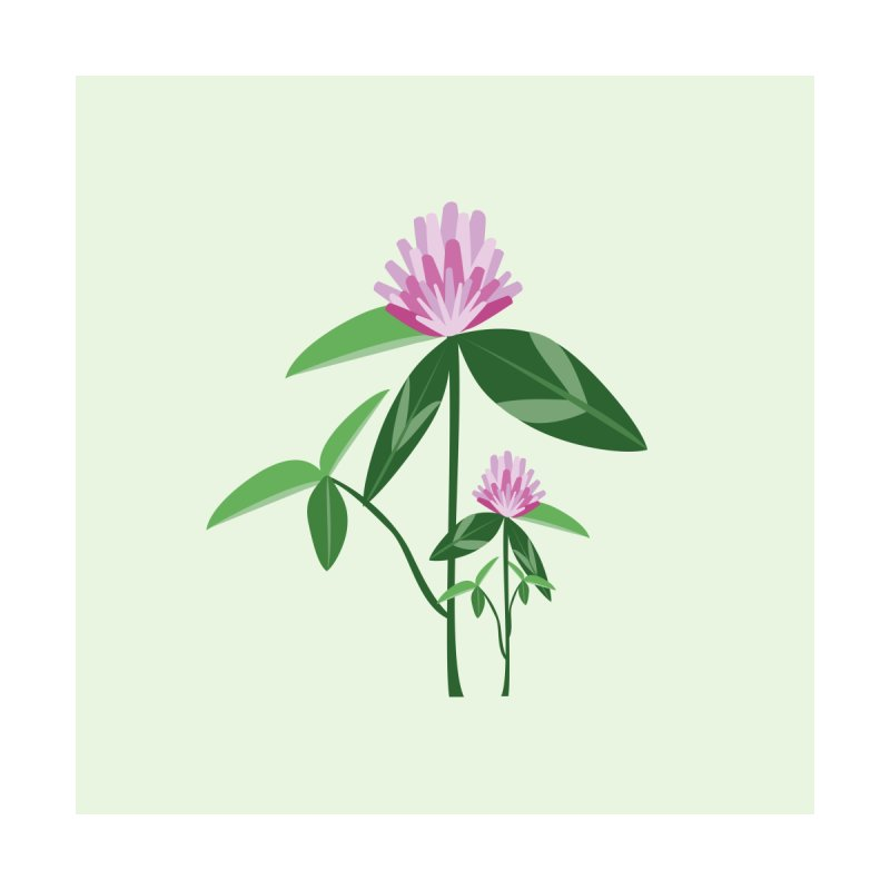 Red Clover - Wildflower Collection Home Stretched Canvas by buxmontweb's Artist Shop