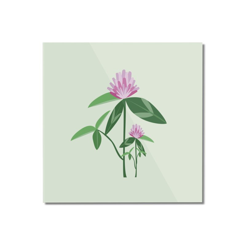 Red Clover - Wildflower Collection Home Mounted Acrylic Print by buxmontweb's Artist Shop