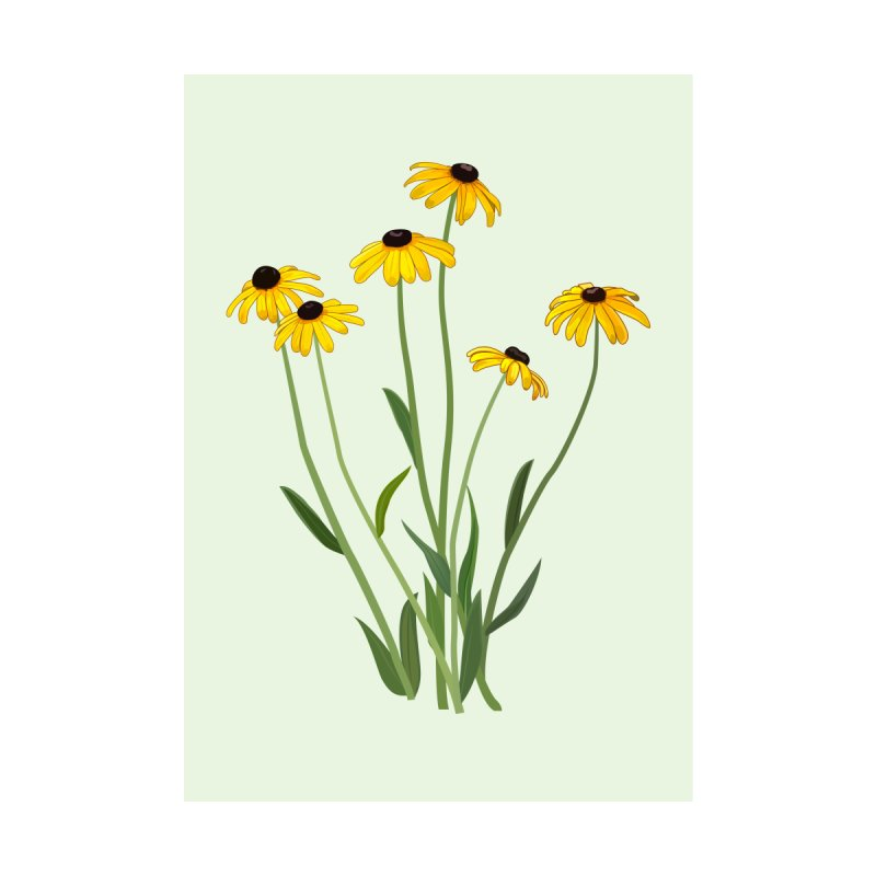 Black Eyed Susans - Wildflower Collection Home Stretched Canvas by buxmontweb's Artist Shop