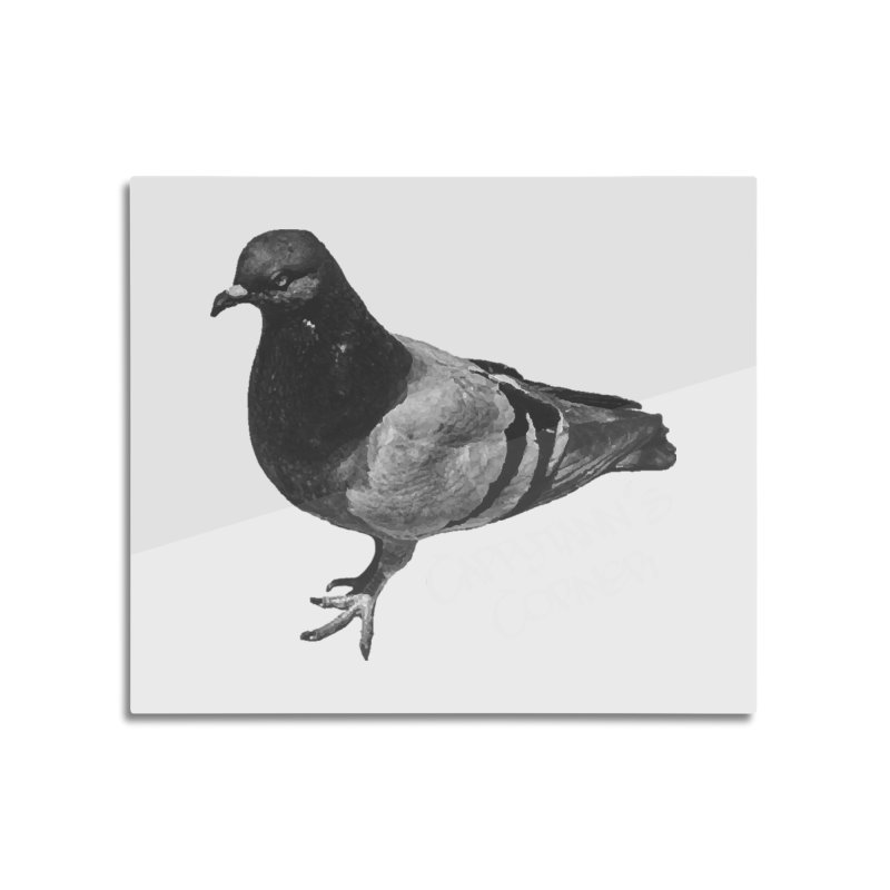 Concrete Pigeon White Home Mounted Aluminum Print by Cappytann's Artist Shop
