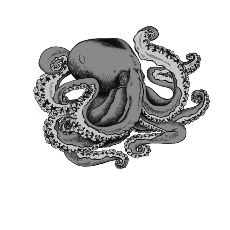Octopus by Carden Illustration