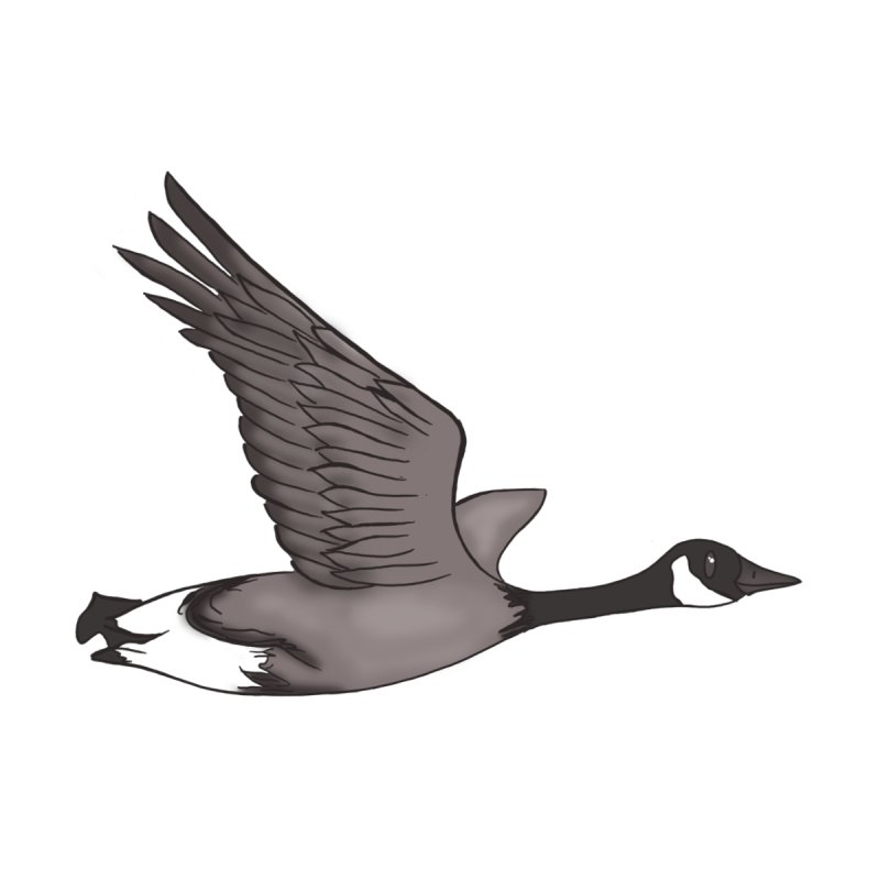 Goose Accessories Magnet by carolyn sehgal's Artist Shop