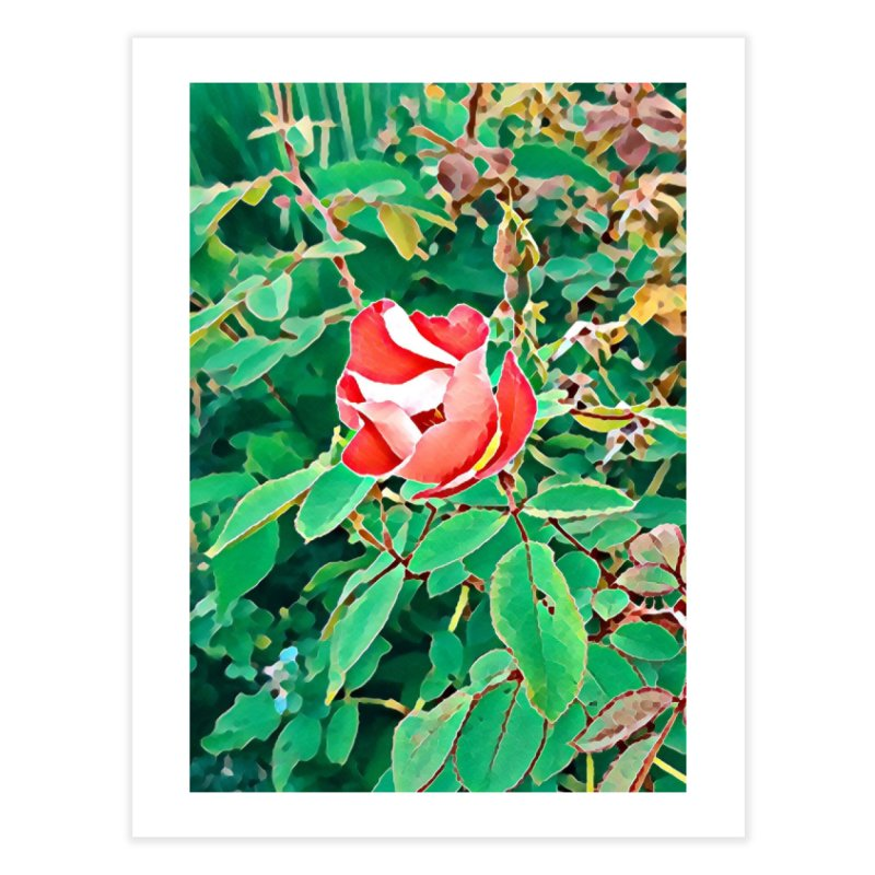 Bloom Home Fine Art Print by C. Cooley's Artist Shop