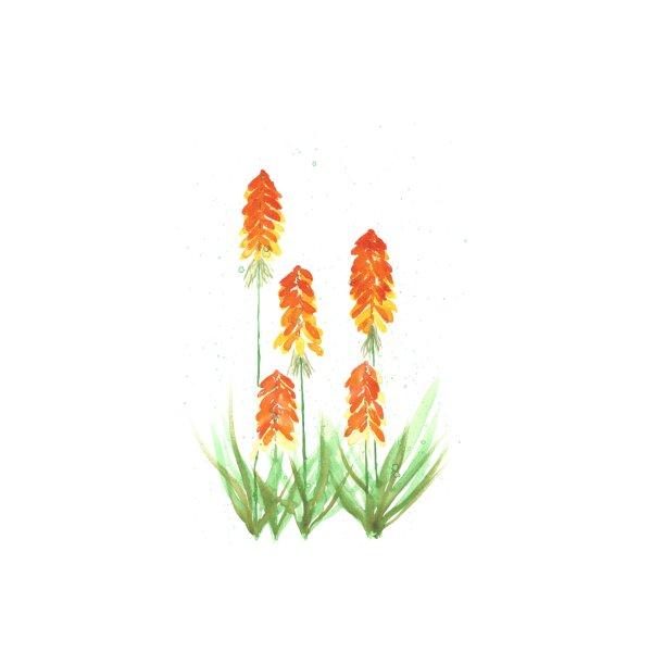 image for The orange ladies