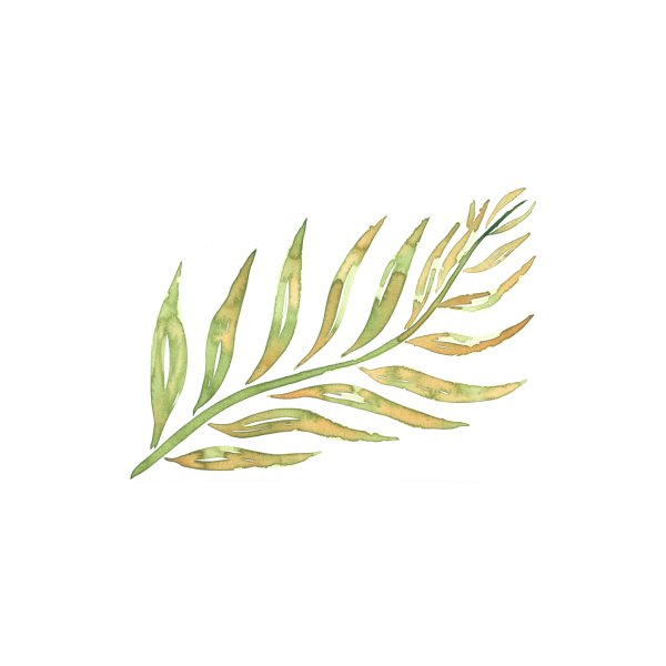 image for A simple leaf